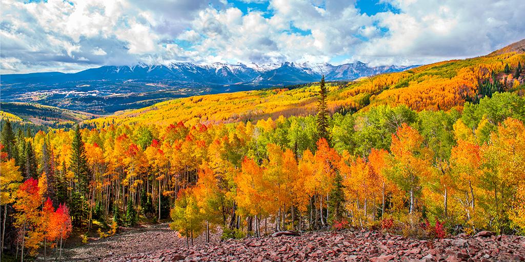 CF058506_Aspens_Fall_Mountains