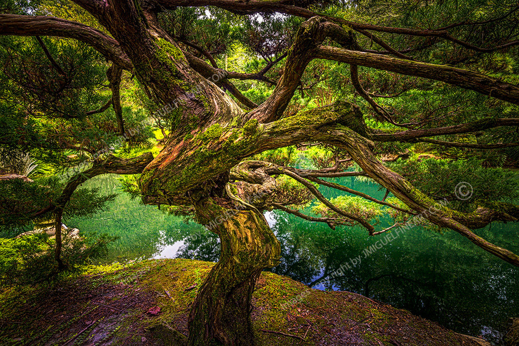 _MG_6468_tree